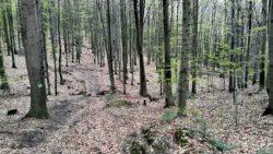 Niebieski szlak w Górach Świętokrzyskich